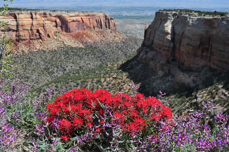 These wildflowers likely won't stick around until June, but this is one of the incredible views RtR participants will enjoy on Day 1.