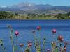 thistle-lined reservoir