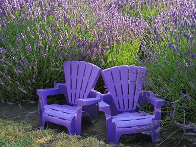 2014 Tour de Lavender