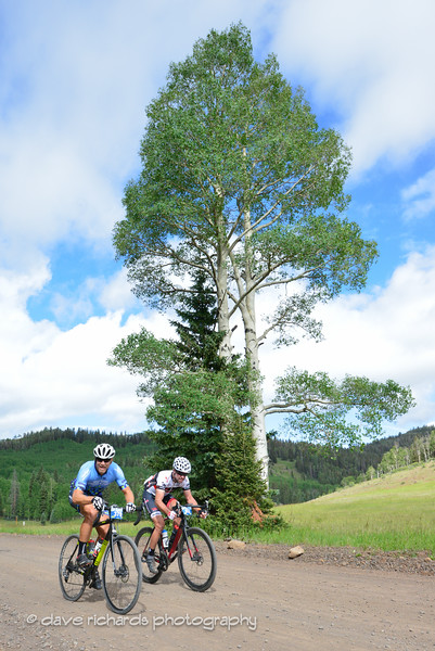 big trees, hard ride