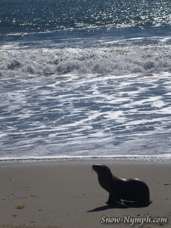2015 (Feb 10) Santa Barbara to Carpenteria Seal Sanctuary and back