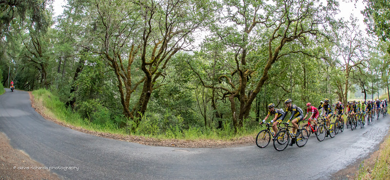 Strange trees greet the riders on King Ridge Road, Stage 7, 2016 Amgen Tour of California