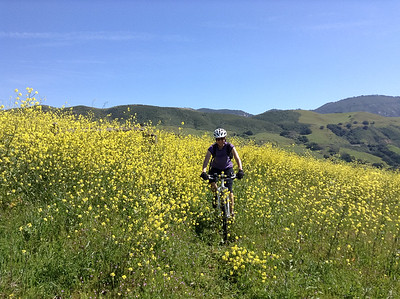 Riding through mustard flowers in the hills above San Luis Obispo