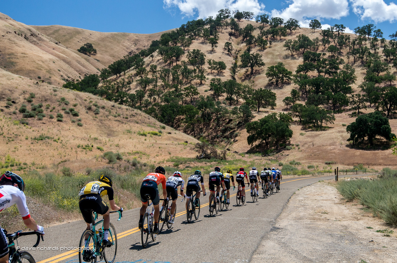 Strange trees form the backdrop as the riders roll up Del Puerto Canyon Road on Men's Stage 2, 2017 Amgen Tour of California (Photo by Dave Richards, daverphoto.com)