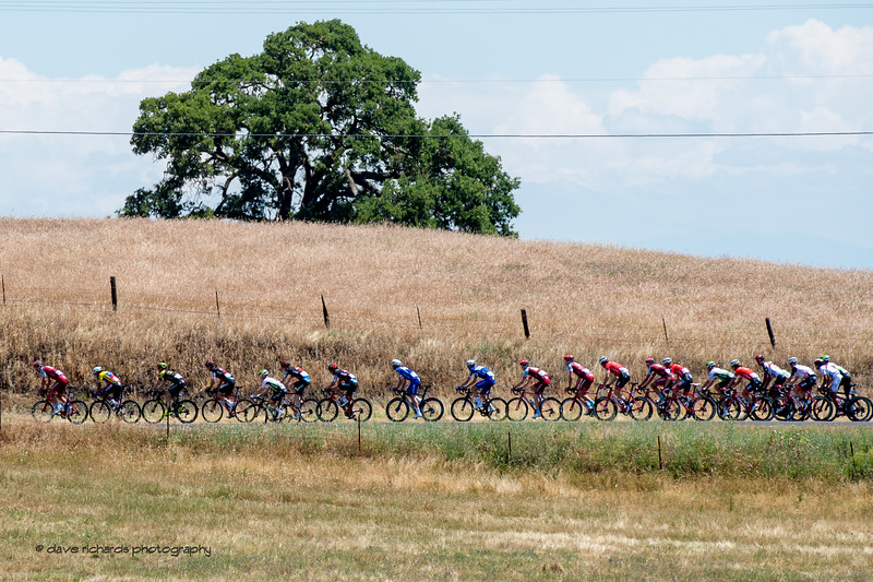 The peloton rolls along the golden hills of  California farmland. Men's Stage Five, Stockton to Elk Grove, 2018 Amgen Tour of California cycling race (Photo by Dave Richards, daverphoto.com)