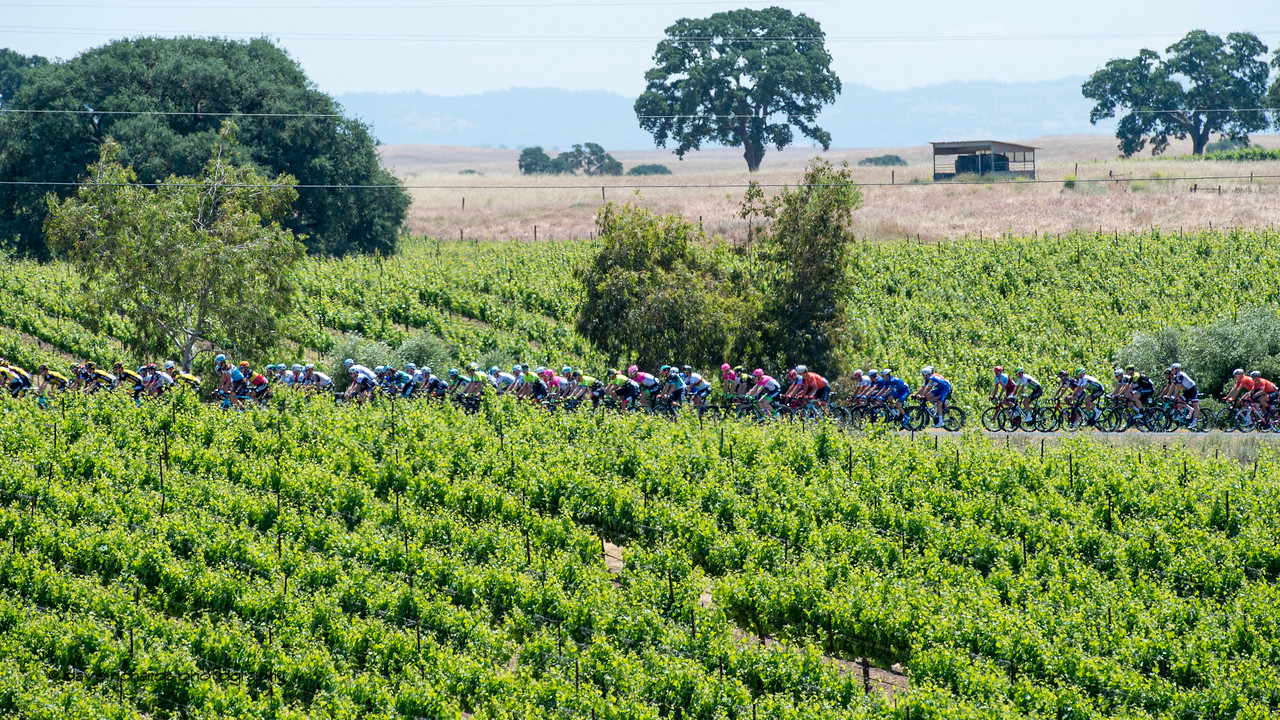 Lush,  green vineyards greet the riders. Men's Stage Five, Stockton to Elk Grove, 2018 Amgen Tour of California cycling race (Photo by Dave Richards, daverphoto.com)