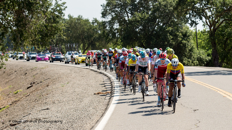 The peloton rolls along the curving roads west of Sacramento. Men's Stage Seven, Sacramento, 2018 Amgen Tour of California cycling race (Photo by Dave Richards, daverphoto.com)