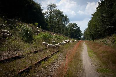 pad naar natuurkampeerterrein Groesbeek