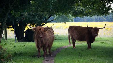 Brabantse bossen rond Haps en Mill