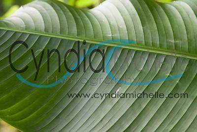 "Original Photo of ""Leaf Scribble"""