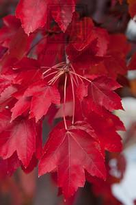 Autumn Leaf Cascade