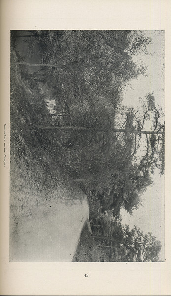 """The Cypress Knee, 1929, """"Somewhere on the Campus"""", pg. 45"""