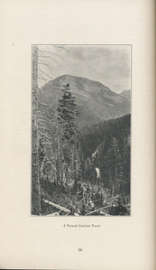 """The Cypress Knee, 1929, """"A Natural Lookout Tower"""", pg. 26"""