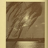 The Cypress Knee, 1936, pg. 2