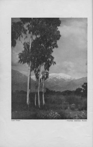 The Cypress Knee, 1940, pg. 2