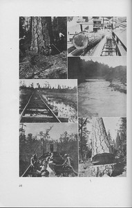 The Cypress Knee, 1942, Collage, pg. 28