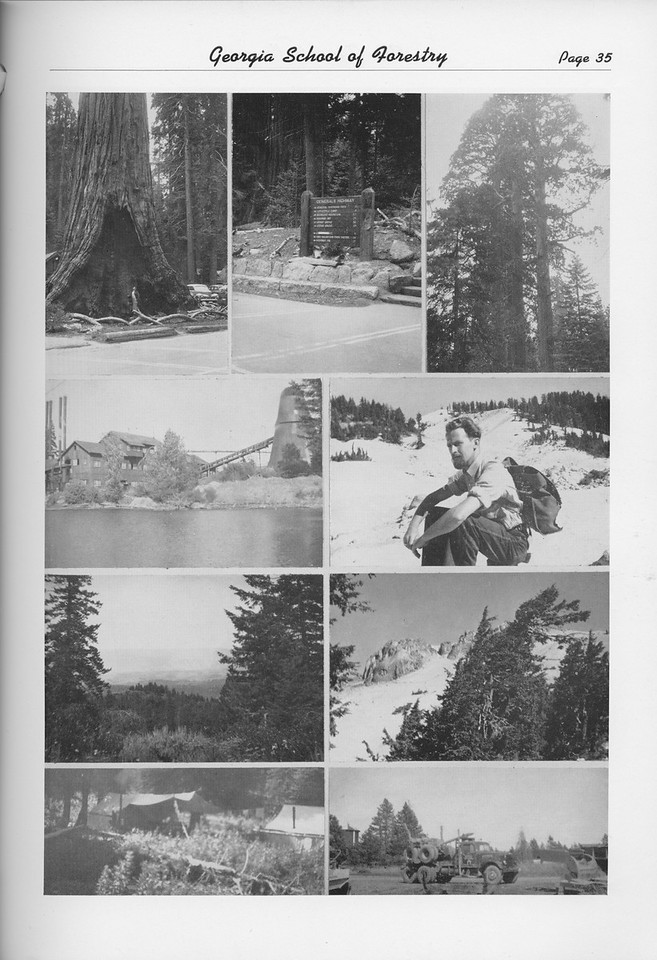 The Cypress Knee, 1950, Photo Collage, pg. 35