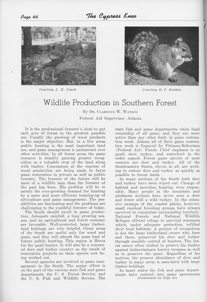 """The Cypress Knee, 1950, """"Wildlife Production in Southern Forest"""", Dr. Clarence W. Watson, pg. 46"""