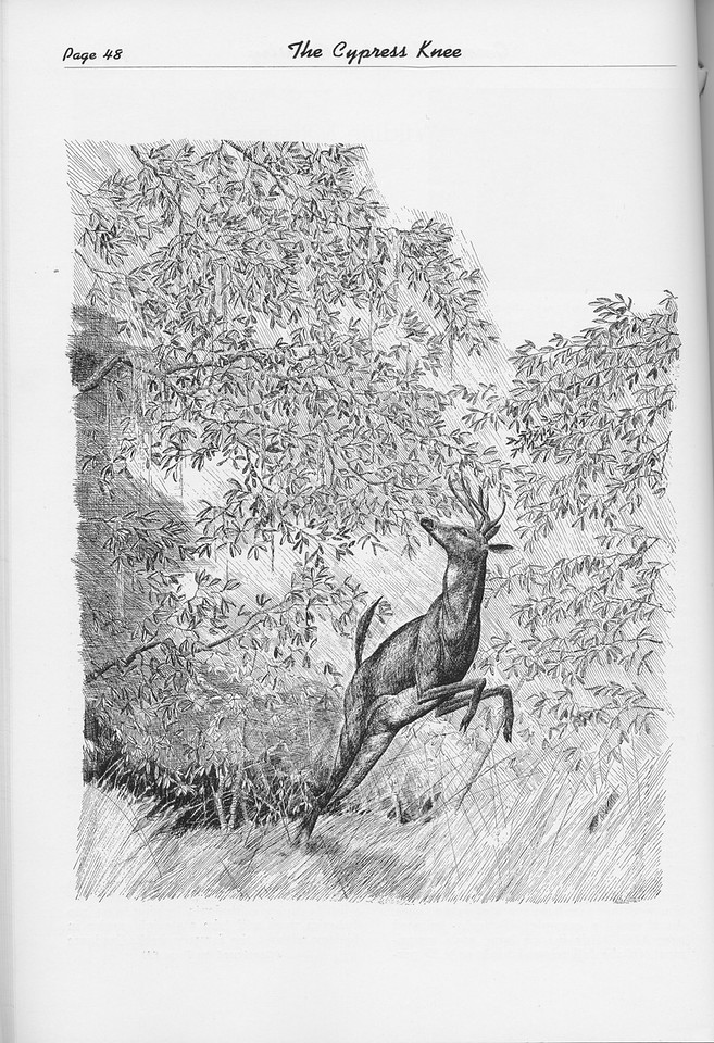 The Cypress Knee, 1950, pg. 48