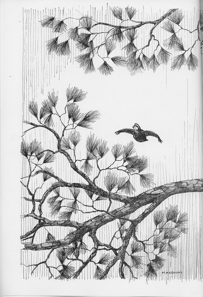 The Cypress Knee, 1950, pg. 28