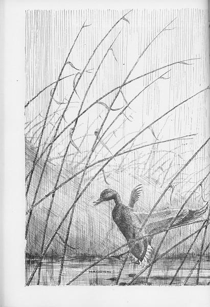 The Cypress Knee, 1950, pg. 40