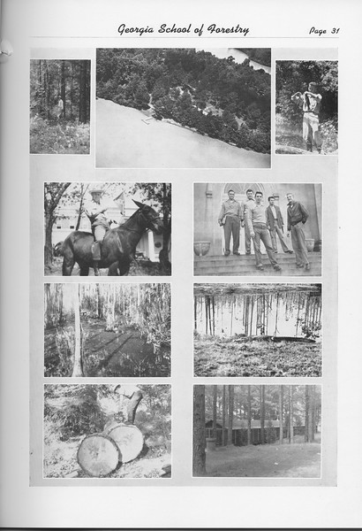 The Cypress Knee, 1951, Photo Collage, pg. 31