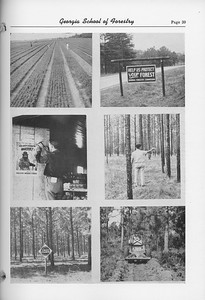 The Cypress Knee, 1952, Forest Collage, pg. 39
