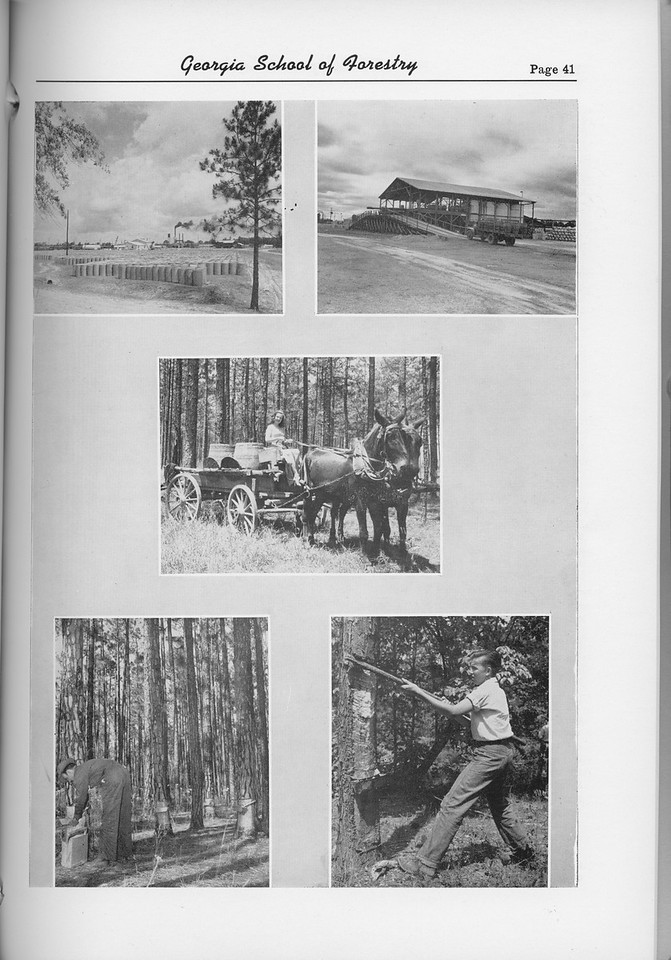 The Cypress Knee, 1954, Forestry Collage, pg. 41