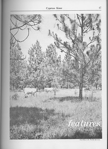 The Cypress Knee, 1965, Introduction to Features, pg. 47