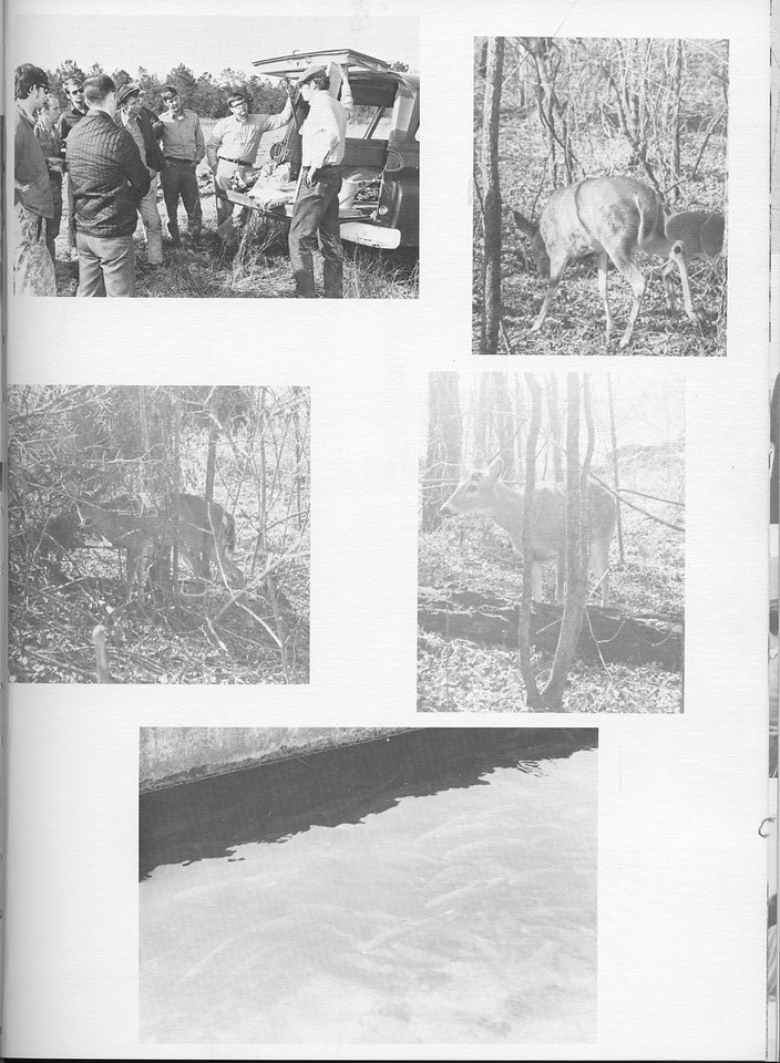 The Cypress Knee, 1971, Wildlife Society, pg. 47