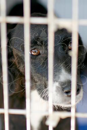 Paphiakos and CCP Animal Welfare Shelter on Cyprus
