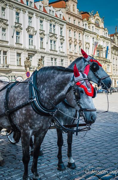 Devil Horses