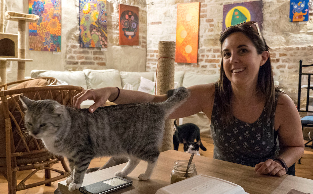 Kavarna Kocici: Cat Cafe in Prague
