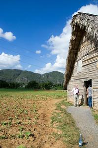 Tabáková farma