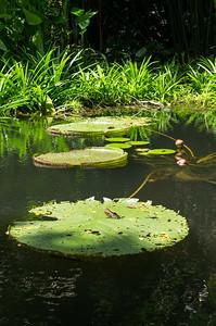 Tropická zahrada