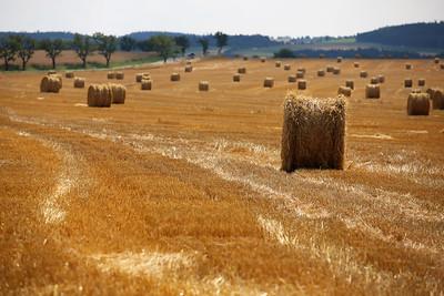 Hay Fields, Líšná, Czech Republic
