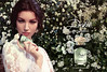 DOLCE & GABBANA Dolce 2014 United Arab Emirates (folding spread) 'The new fragrance'