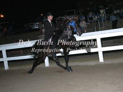 CLASS 27  - 4 YR OLD OPEN SPECIALTY