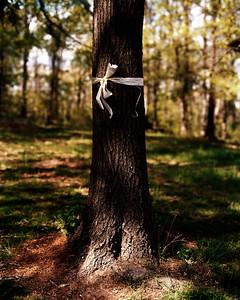 USA. Columbia, Missouri. 2005. Tree with yellow ribbon.