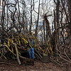 USA. Staten Island.  2013.  Doug Schwartz builds a sanctuary in the woods out of dead branches and other found objects near the shore of southwest Staten Island.  Schwartz, a zookeeper at the Staten Island Zoo, has been building sculptures and private sanctuaries on the shore for decades.  All of his works were destroyed by Hurricane Sandy but he immediately began building anew.