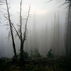 USA. Montana. Fire damaged forests in Yellowstone National park.
