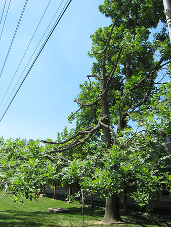 5/2012 Ameren Trims Trees