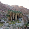 Date Palm oasis