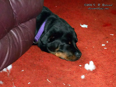 Roxie Sleeps in the Debris Field of Her Exploded Toy
