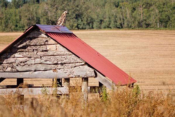 Ellis Bird Farm, Aug 2012