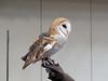 032017-BlanfordNatureCtr_Owls-DB-jm-151