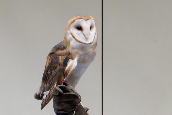 032017-BlanfordNatureCtr_Owls-DB-jm-101