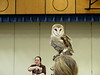032017-BlanfordNatureCtr_Owls-DB-jm-152