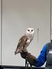 032017-BlanfordNatureCtr_Owls-DB-jm-103