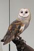 032017-BlanfordNatureCtr_Owls-DB-jm-094